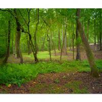 Rainy Morning Meadow by cs750 in Regular Member Gallery