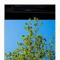 Tree Meets Building by Simon M. in Regular Member Gallery