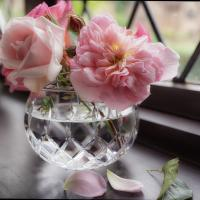 Roses One, Two And Three by chiquita in Regular Member Gallery