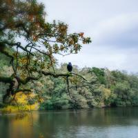 Bird On A Branch by chiquita