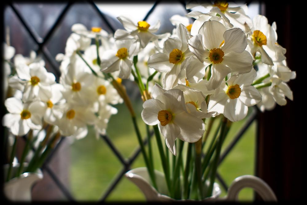 Springtime by chiquita in Regular Member Gallery