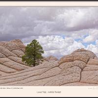 Lone Tree - White Pocket by Joe Colson in Regular Member Gallery
