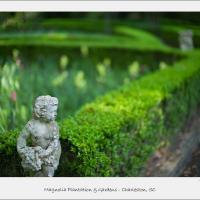 Magnolia Plantation - Charleston, Sc by Joe Colson in Regular Member Gallery