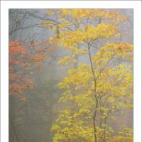 Colson 121027 L1000632-edit-frameshop by Joe Colson in Regular Member Gallery