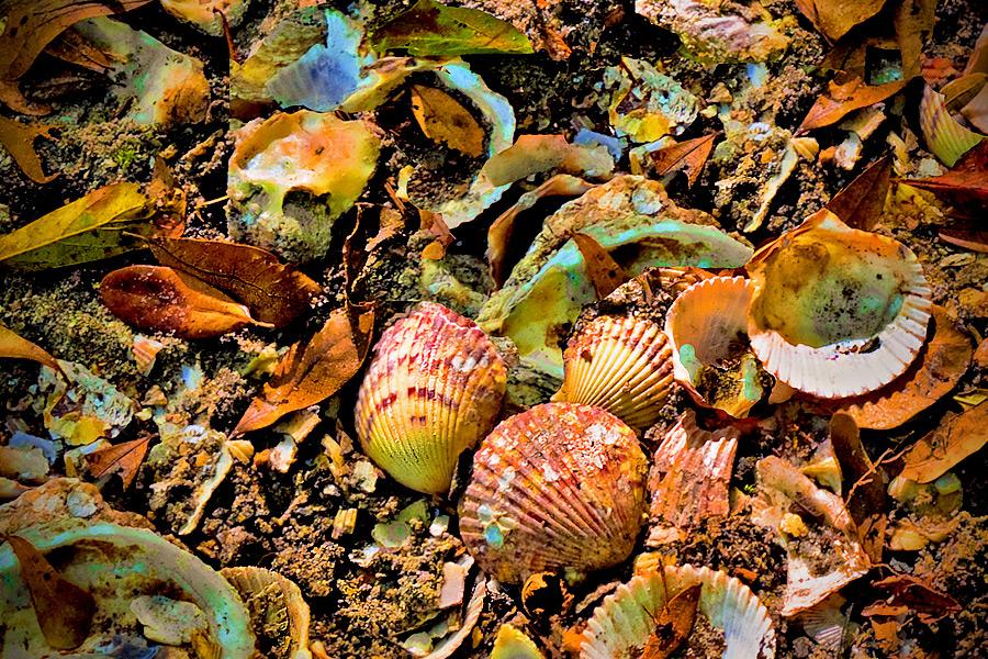 Funky Seashells by Joan in Regular Member Gallery