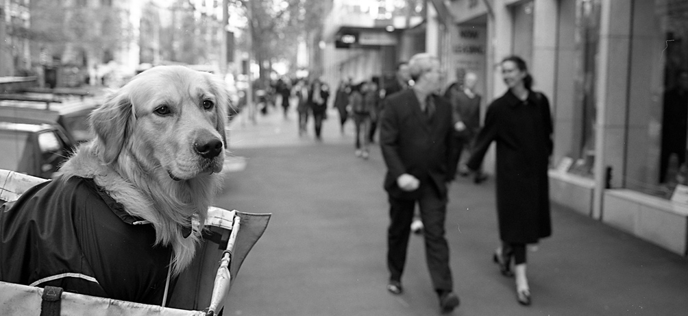 Doggylp by PeterA in Regular Member Gallery