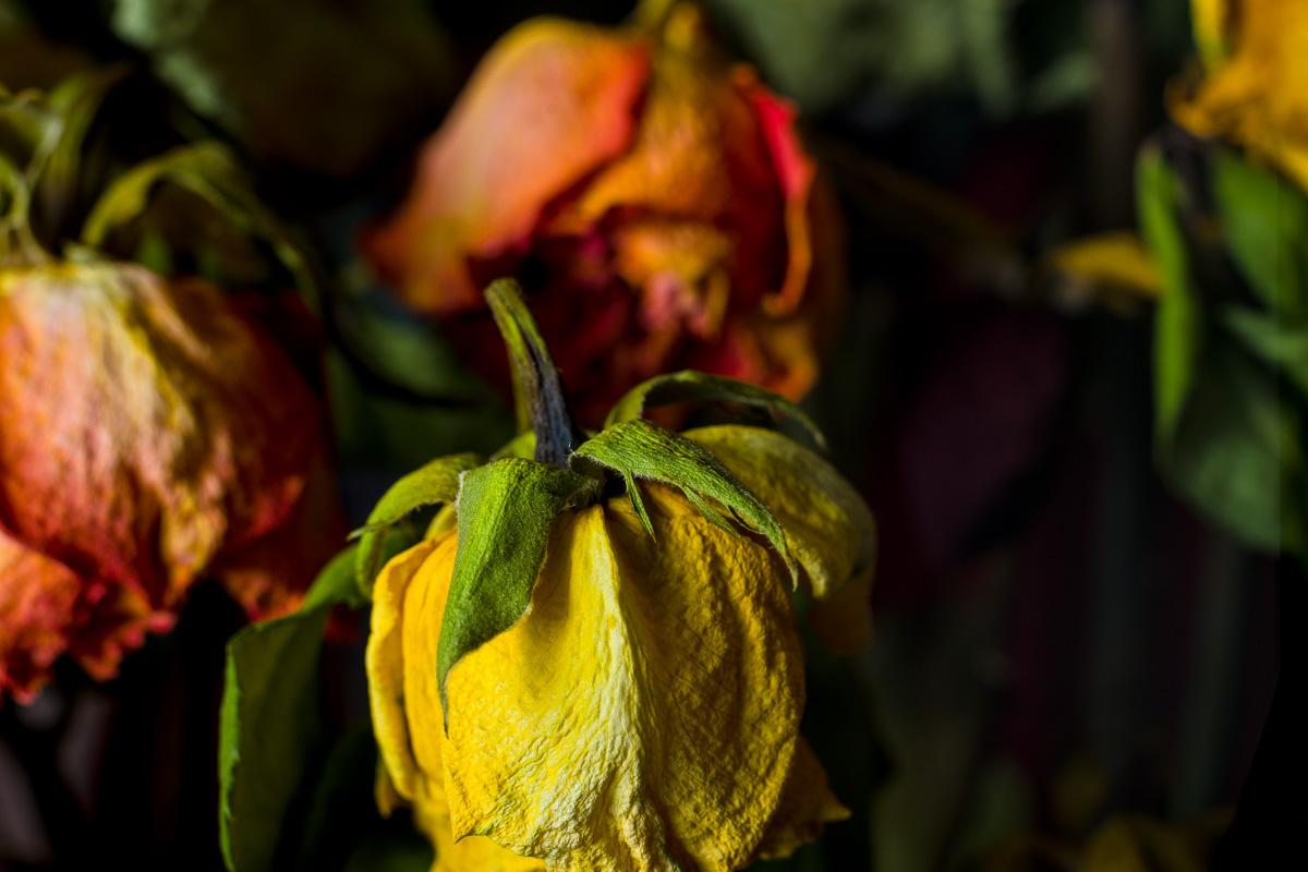 Dsc1387 by pflower in alajuela