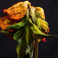 Dsc1623 by pflower in alajuela