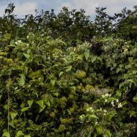 Hedge by pflower in Regular Member Gallery