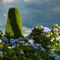 Hydrangeas by pflower in Regular Member Gallery