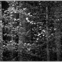 Yosemite by Joseph Ramos in Joseph Ramos