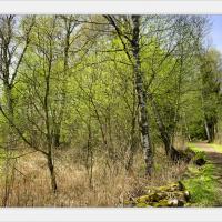 Moor.spring by jotloob in jotloob