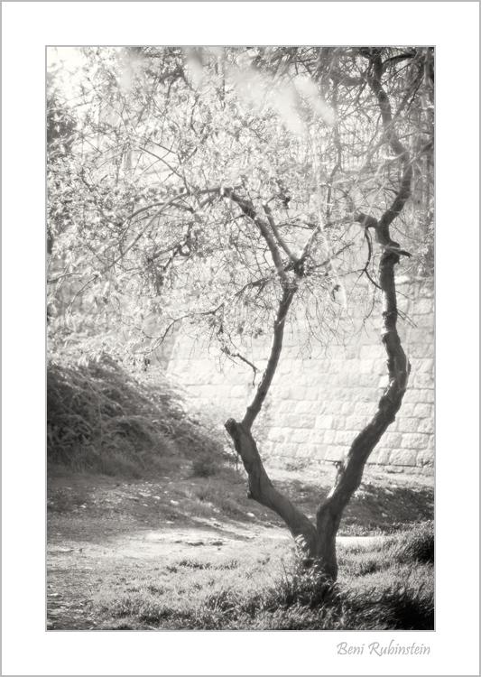 Behind by Ben Rubinstein in Contemplation (part 2)