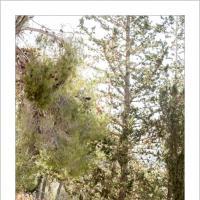 Forest Wander by Ben Rubinstein in Regular Member Gallery