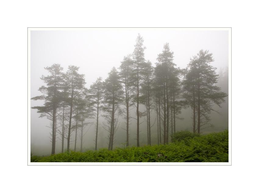 Highland Mist by Ben Rubinstein in Scotland