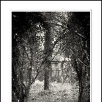 Irish Veil by Ben Rubinstein