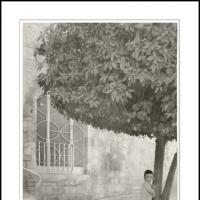 Orange Tree by Ben Rubinstein in Regular Member Gallery