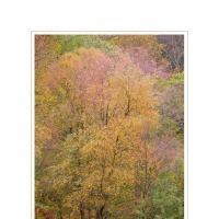 Yewdale Autumn by Ben Rubinstein in Lake District
