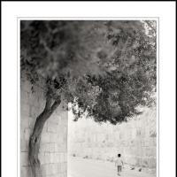 Zion Gate by Ben Rubinstein in Contemplation (part 2)