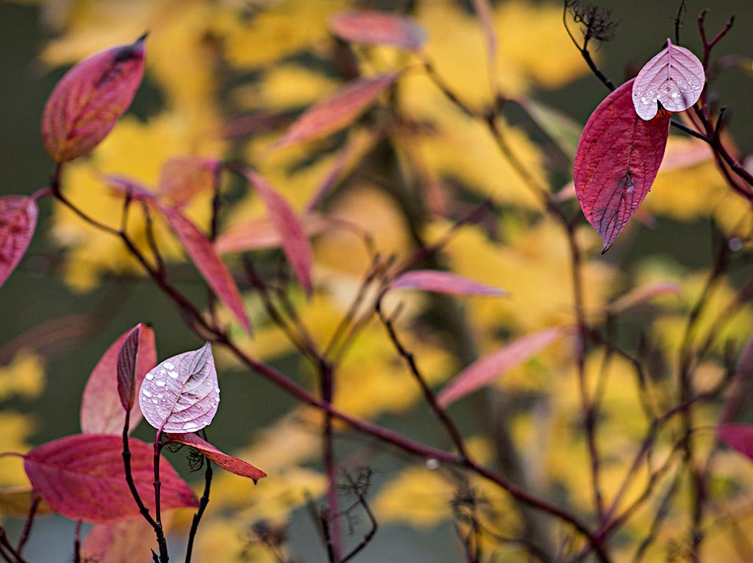 Autumncolours by Arne Hvaring in Arne Hvaring