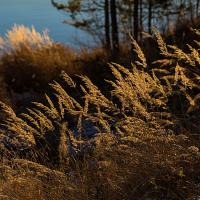 Autumnstraws by Arne Hvaring in Arne Hvaring