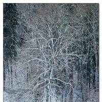 Grener by Arne Hvaring