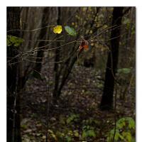 Leaf by Arne Hvaring in Arne Hvaring