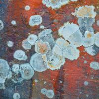 lichen2 by Arne Hvaring in Arne Hvaring