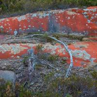 lichen by Arne Hvaring in Arne Hvaring