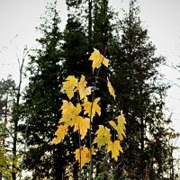 Yellowleaves by Arne Hvaring