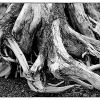 Old stump on Turnagain Arm beach in Hope by bensonga in bensonga