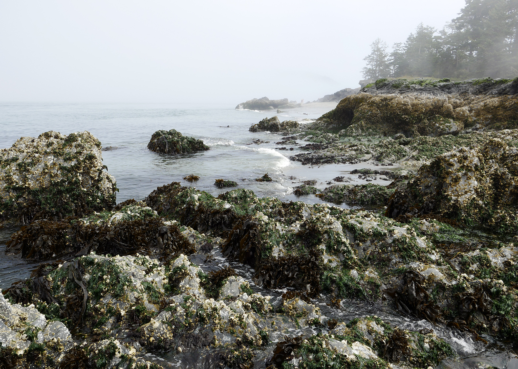 West Beach in Deception Pass SP on Whidbey Island by bensonga in bensonga