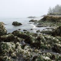 West Beach in Deception Pass SP on Whidbey Island by bensonga
