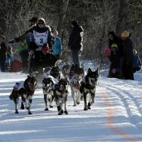 Iditarod Sled Dog Race Anchorage Start by bensonga in bensonga