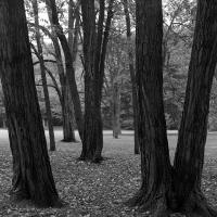 Cleveland Trees by bensonga
