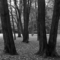 Cleveland Elm Trees by bensonga