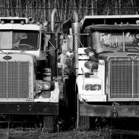 Two Trucks For Sale by bensonga