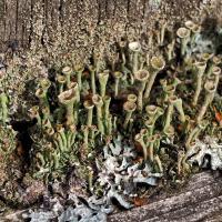 Lichens by bensonga