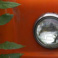 Orange Truck & Sapling by bensonga in bensonga