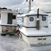Two Cats from Juneau by bensonga in bensonga