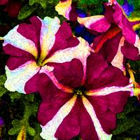 Funky Petunia by bensonga