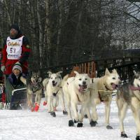 Iditarod Sled Dog Team by bensonga in bensonga