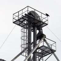A Solitary Raven by bensonga in bensonga