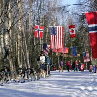 Iditarod Dog Sled Race Anchorage Start by bensonga