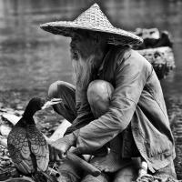 Jono's Chinese Fisherman And Cormorant by bensonga