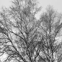 Tree Branches Waiting For Spring