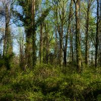 Full-on Spring In Northern Virginia by TimothyHyde