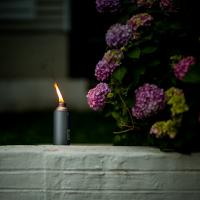 Citronella by TimothyHyde in Regular Member Gallery